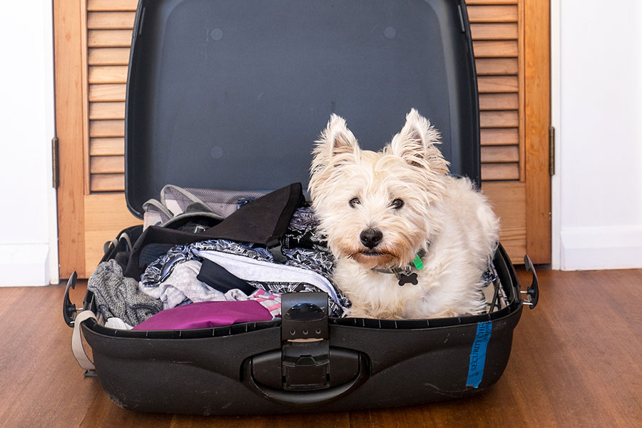 dog in an open suitcase